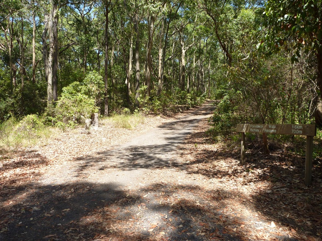 Forested trail in Blackbutt Reserve (401266)