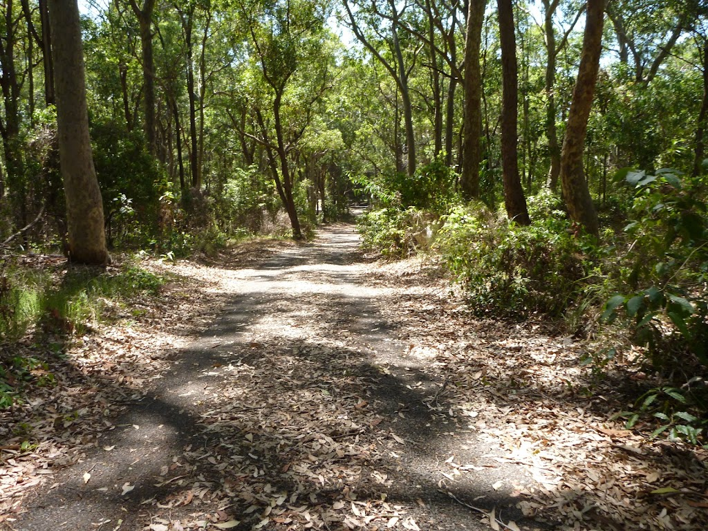 Trail near Mahognay Picnic Area in Blackbutt Reserve (401278)