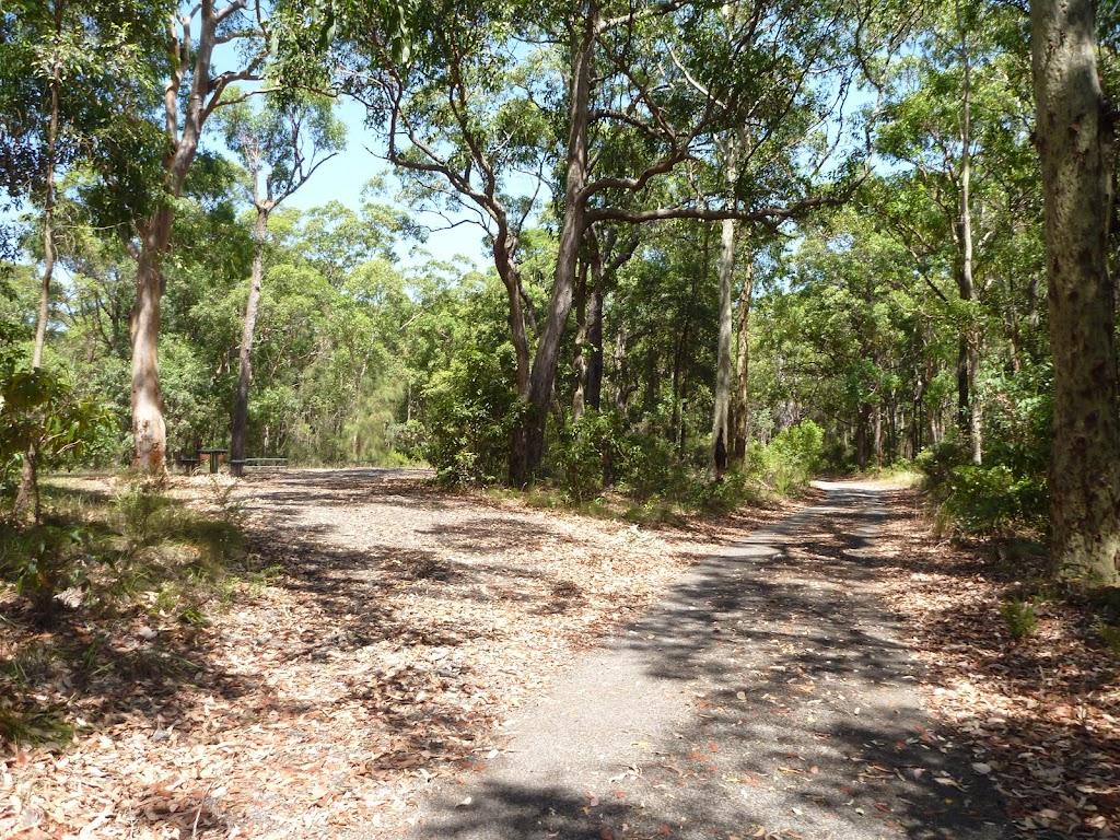 Wide trails near Mahognay Picnic Area in Blackbutt Reserve