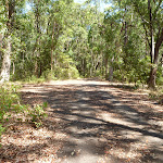 Sealed trail in Blackbutt Reserve