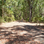 Trail through fores in Blackbutt Reserve