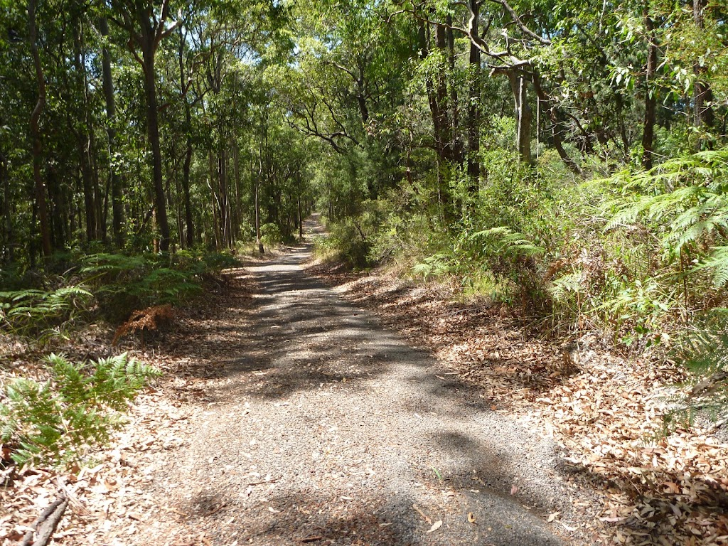 Forested trail near Lookout Road in Blackbutt Reserve