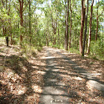 Forested trail in Blackbutt Reserve