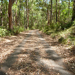 Trail through forest at Blackbutt Reserve (401419)