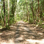 Uphill trail near Richley Reserve in Blackbutt Reserve (401449)