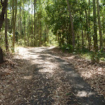 Trail through forest in Blackbutt Reserve
