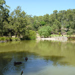 Richley Reserve pond with ducks in Blackbutt Reserve
