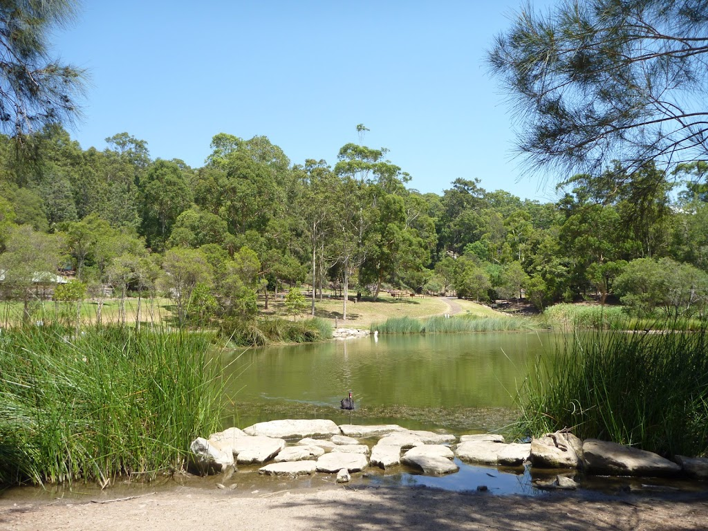Large pond with black swan in Richley Reserve (401596)