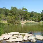 Large pond with swans in Richley Reserve in Blackbutt Reserve (401599)