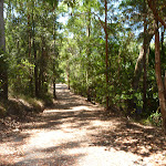Uphill Trail near Richley Reserve in Blackbutt Reserve