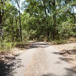 Sealed trail in Blackbutt Reserve (401857)