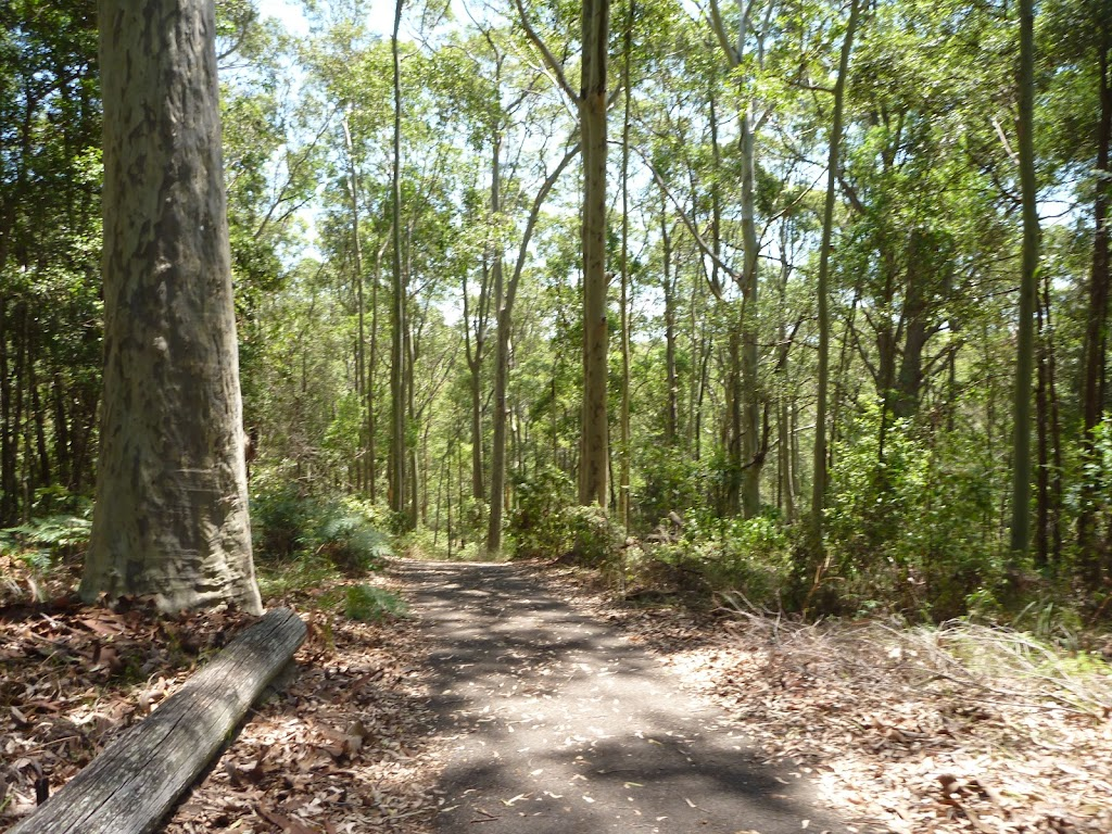 Tall trees beside a trail in the Blackbutt Reserve