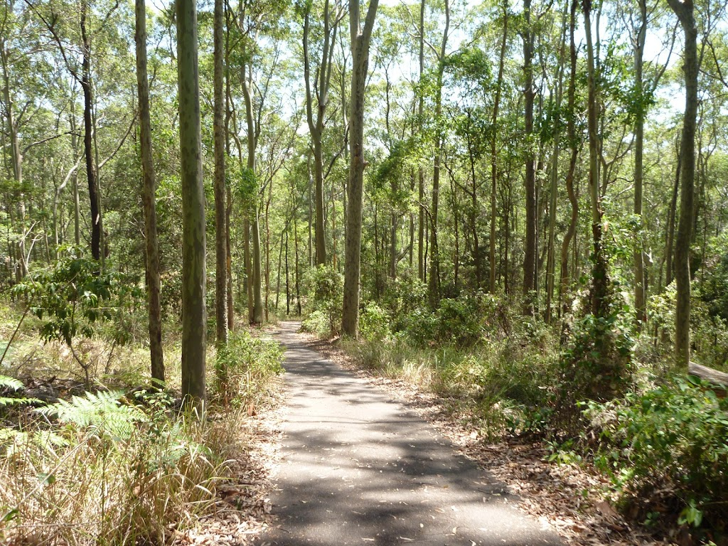 North facing foot path down to Richley Reserve in Blackbutt Reserve