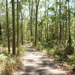 North facing foot path down to Richley Reserve in Blackbutt Reserve (401914)