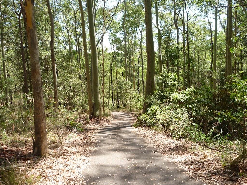 Eucalyptus forest in the Blackbutt Reserve