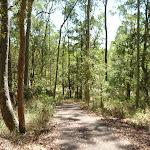 Sunny day in Blackbutt Reserve (401926)