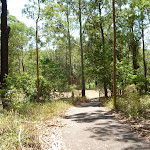Trail to a clearing in Blackbutt Reserve