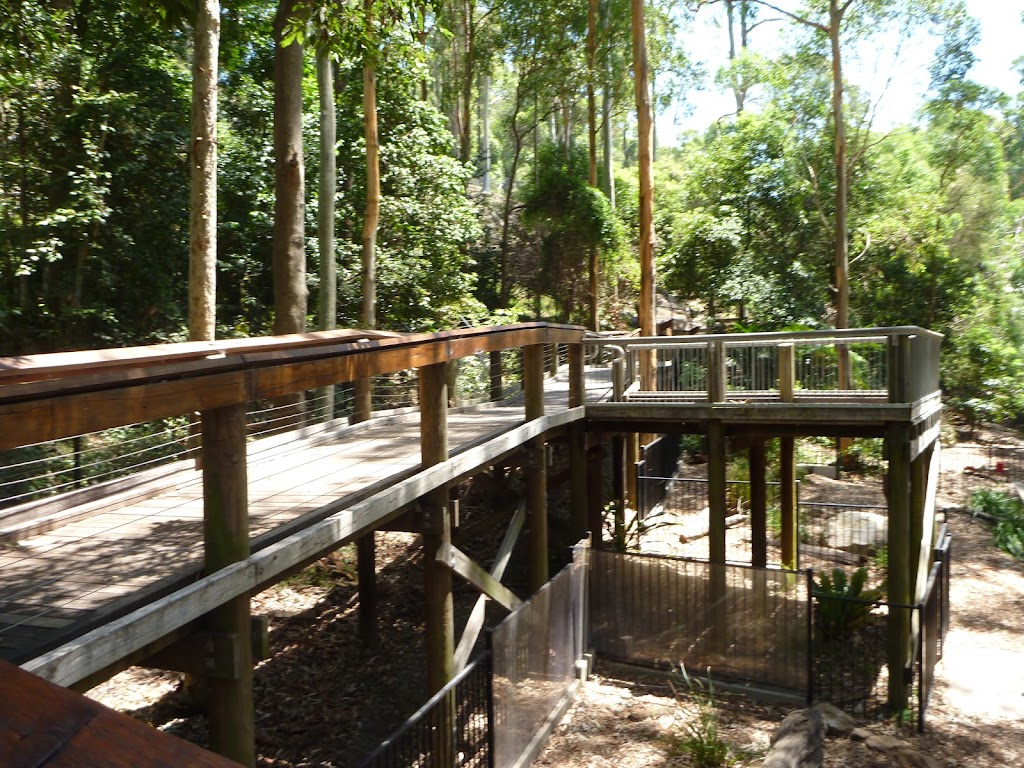 Elevated boardwalk at the Wildlife Exhibits at Blackbutt Reserve