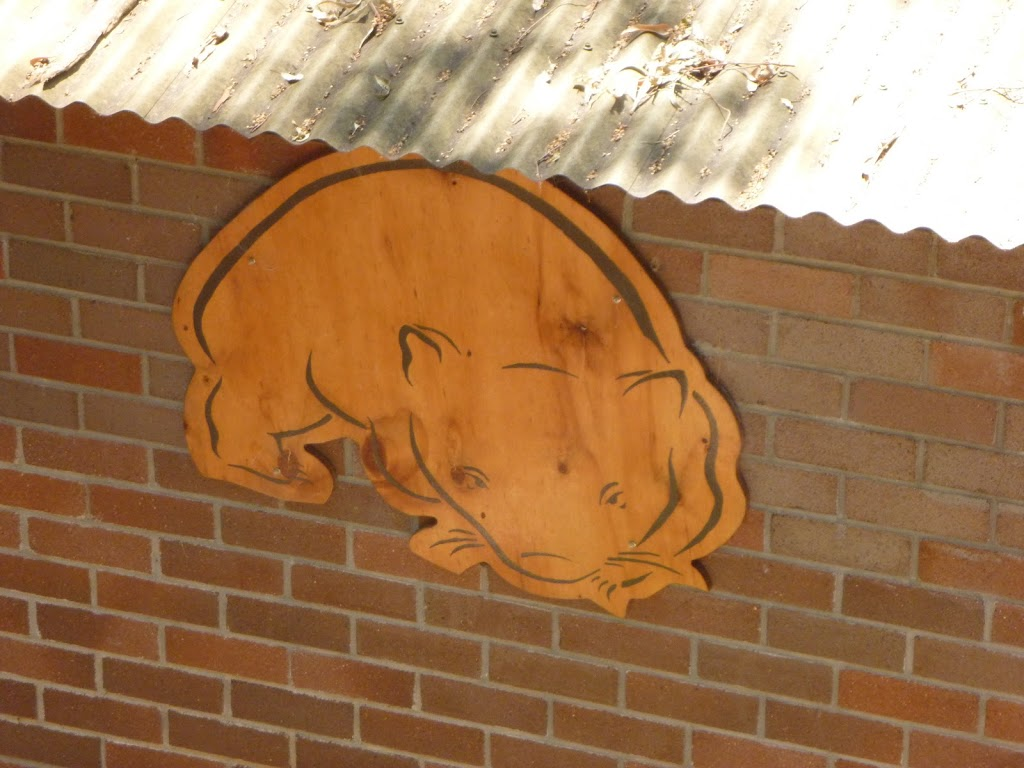 Picture of a wombat on the Wildlife Exhibits in Blackbutt Reserve (401986)