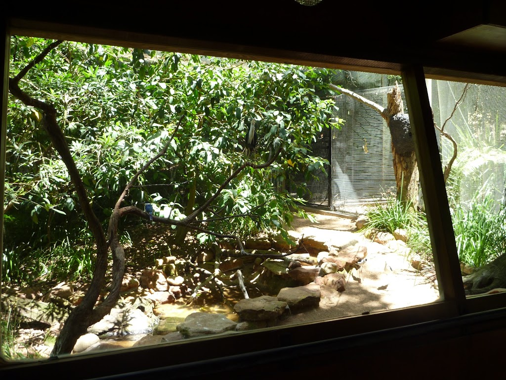 Wildlife hide at the Wildlife Exhibits in Blackbutt Reserve (402037)