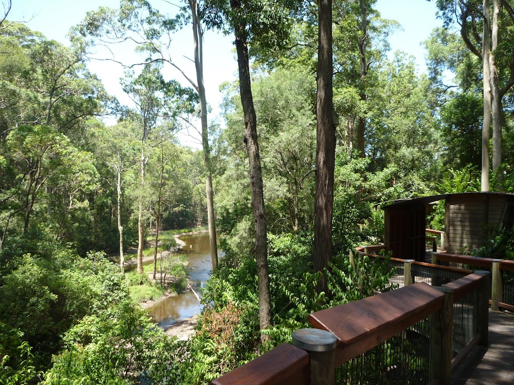 Views from the Boardwalk on the Wildlife Exhibits in Blackbutt Reserve (402154)