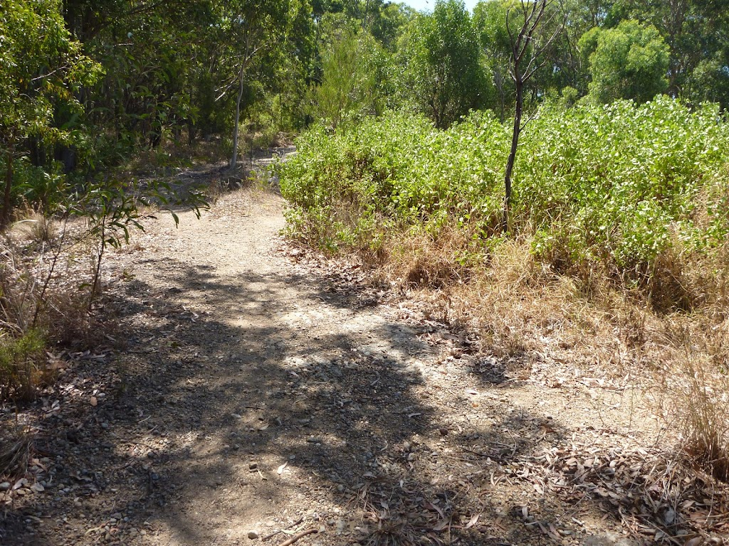Green Point Reserve bushland