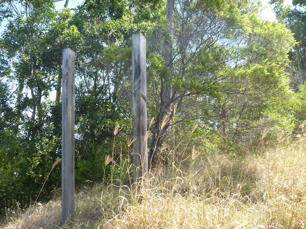 Posts in bushland, Green Point Reserve