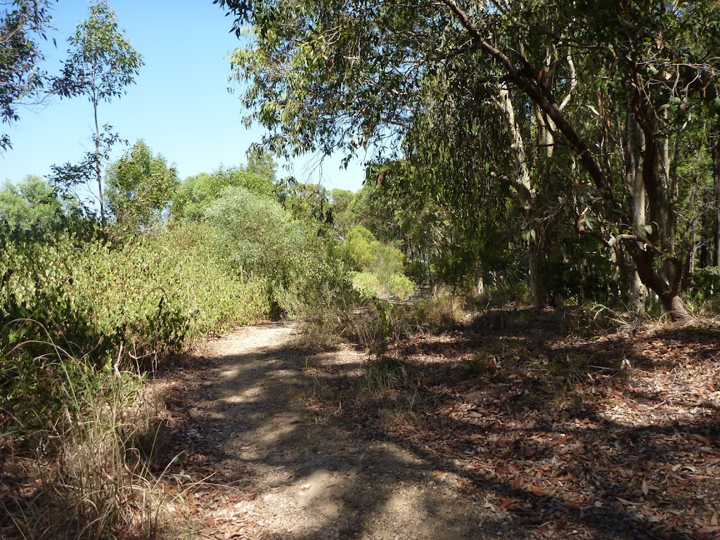 Track through Eucalypt forest, Green Point Reserve
