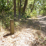Signposts guide bushwalkers through Green Point Reserve (402493)