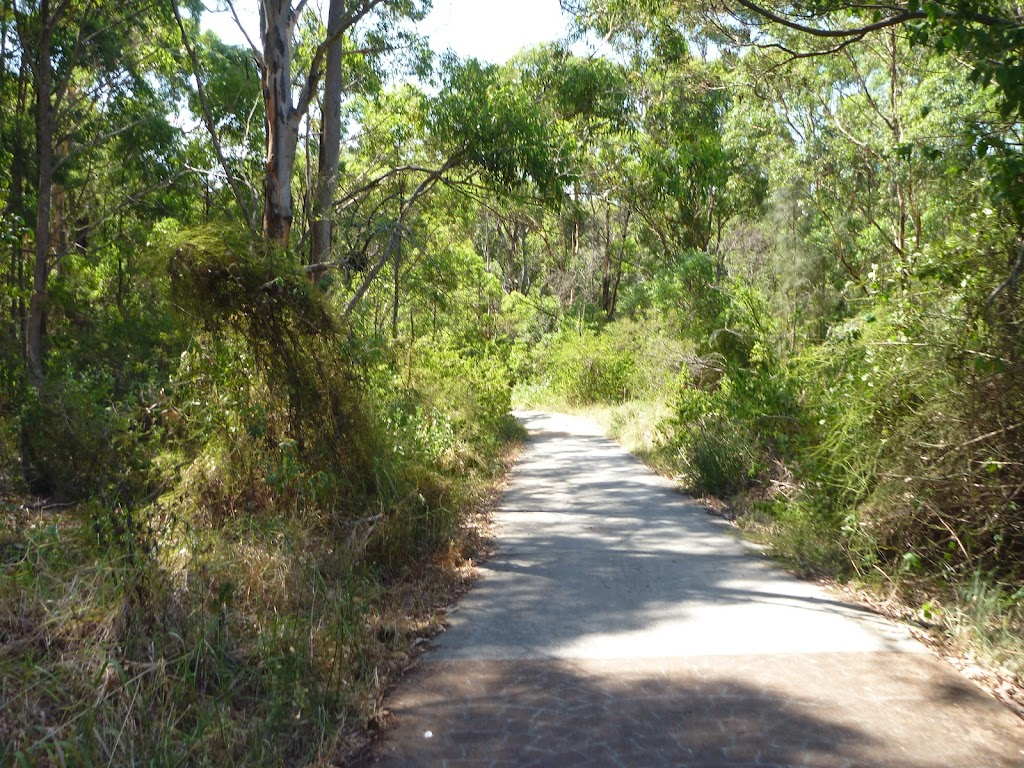 Foot path through eucalyptus forest in Green Point Reserve