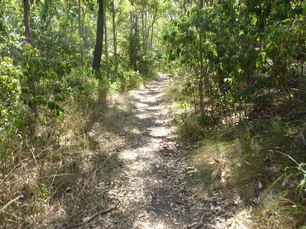 Forest track near Green Point on Lake Macquarie