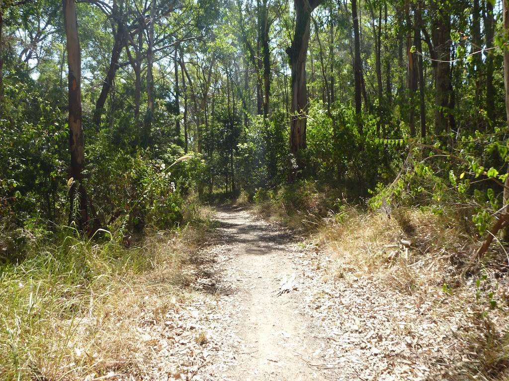 Track in Green Pint Reserve on Lake Macquarie