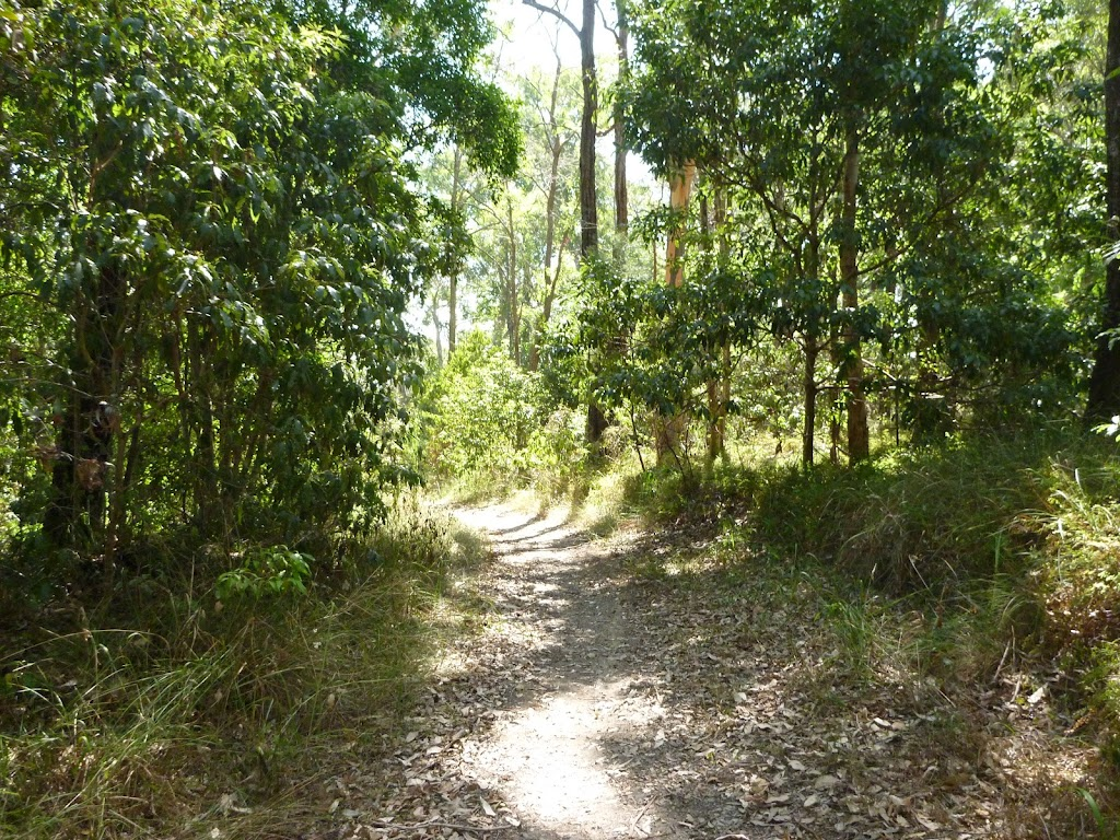 Bushwalking in eucalypt forest Green Point Reserve (403063)