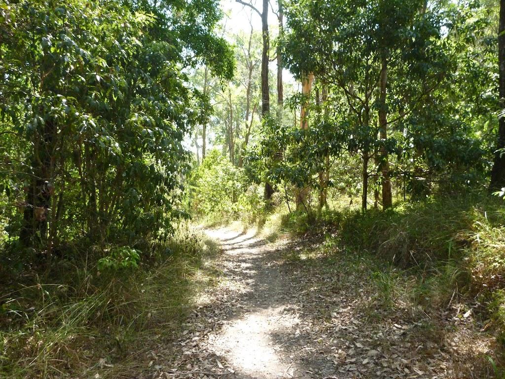 Bushwalking in eucalypt forest, Green Point Reserve