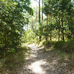 Bushwalking in eucalypt forest Green Point Reserve (403063)