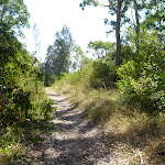 Bush track in Green Point Reserve (403075)