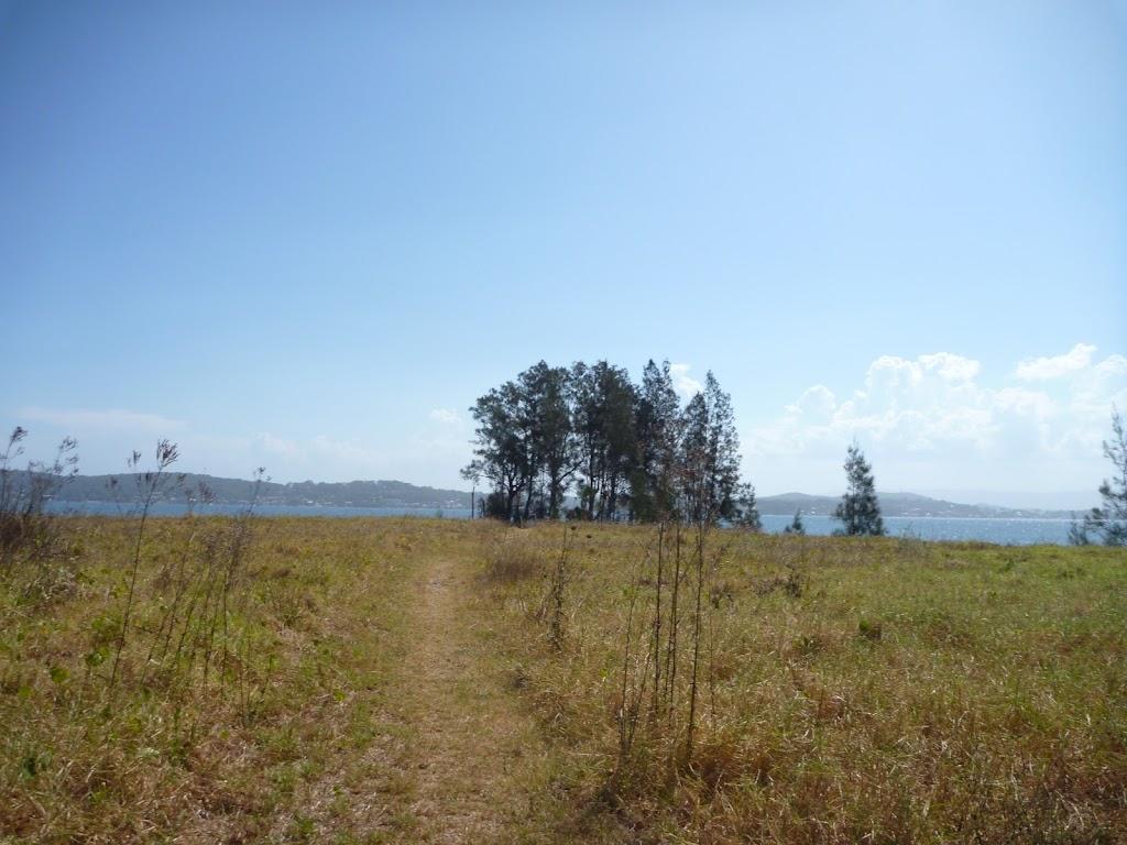 She Oaks beside Green Point, Lake Macquarie
