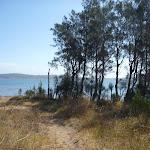 She Oaks beside Green Point (403114)