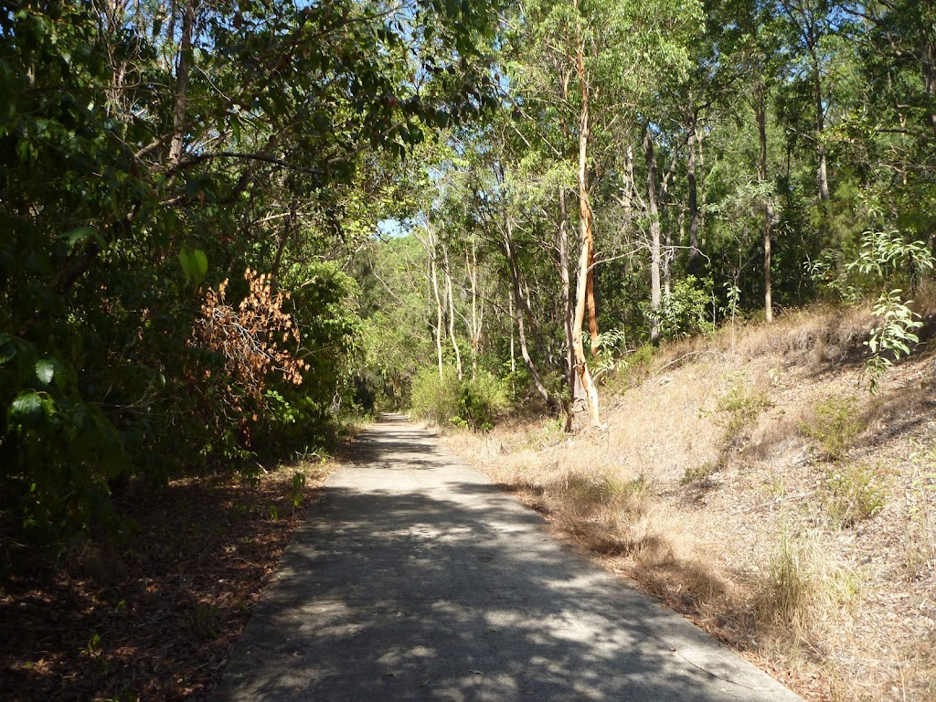 Eucalyptus forest beside trail in the Green Point Reserve