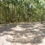 A wide fire trail in Green Point Reserve (403576)