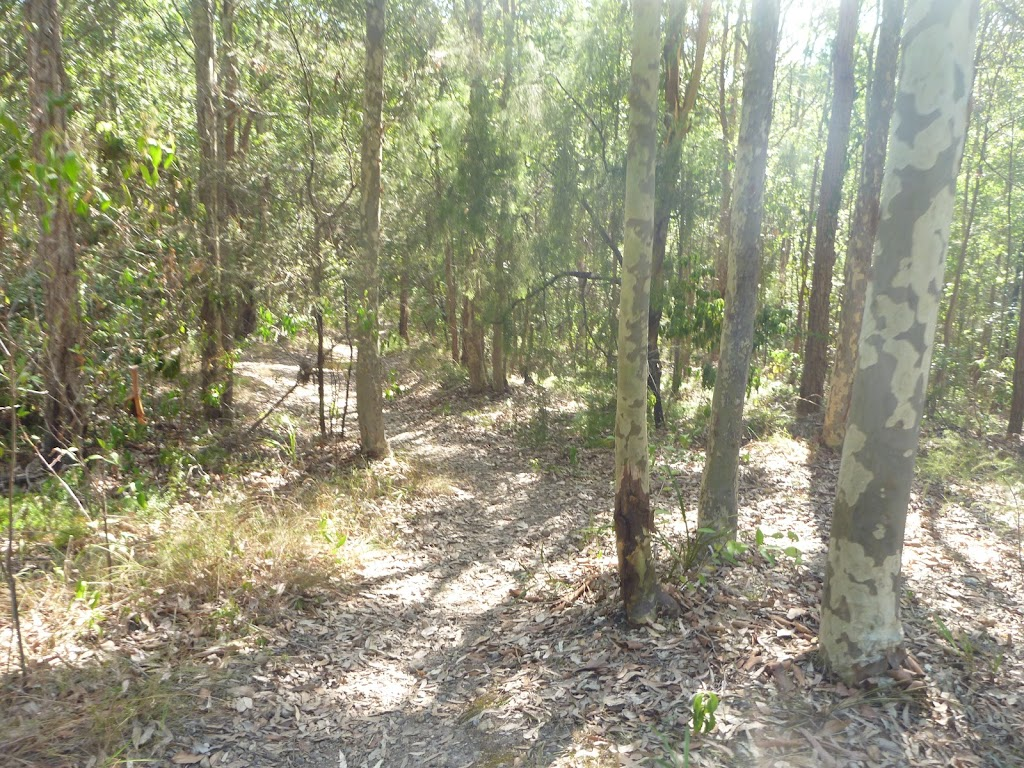 Track into forest near a fire trail in Green Point Reserve