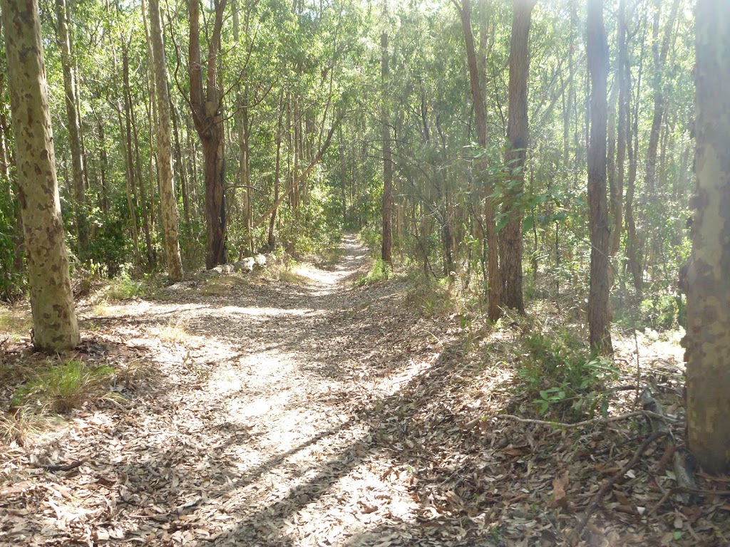 Forested track in Green Point Reserve