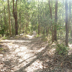 Forested track in Green Point Reserve (403693)