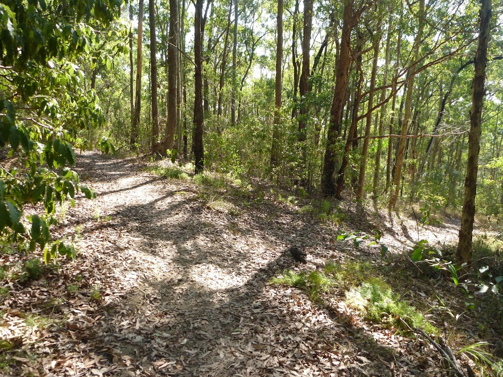 Track deep within the inland of Green Point Reserve
