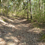 Track through eucalyptus forest in Green Point Reserve (403762)