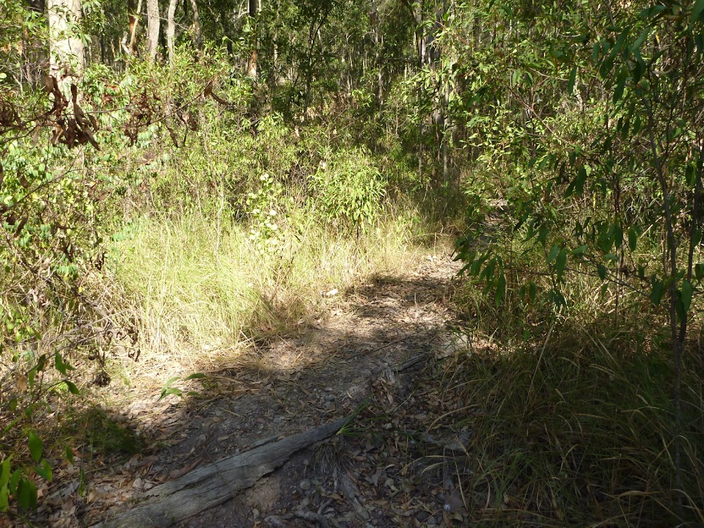 Faint track into forest near the foreshore of Lake Macquarie