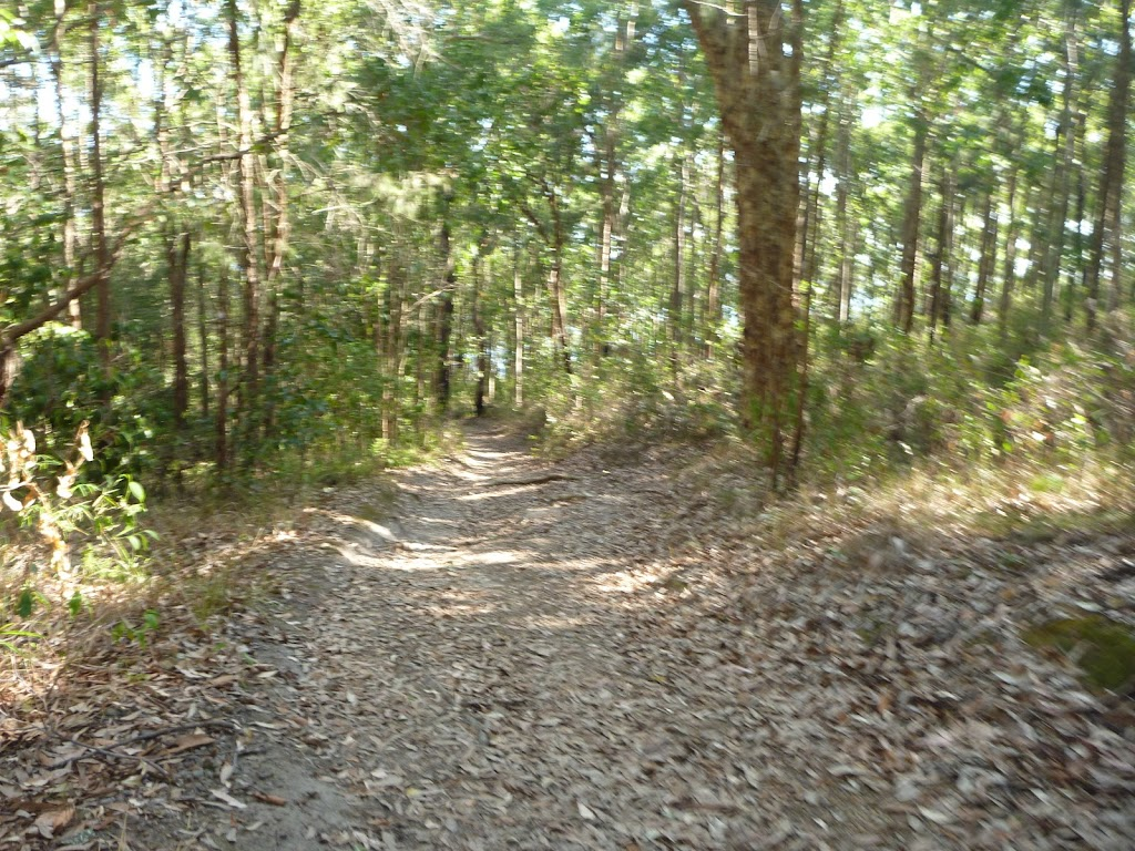 Trail through forest near Rocky-high viewpoint in Green Point Reserve