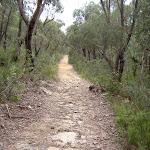 Fortress Ridge service trail (40860)