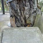 Plaque at Explorers Tree (410759)