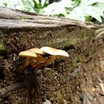 Mushrooms in Nellies Glen (411086)